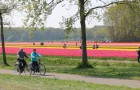 When are the flower fields in the Holland blooming?