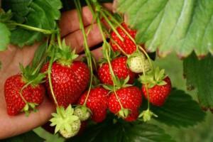 Van Reeuwijk Fruit & Flowers in Abbenes