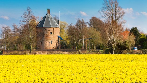 Hollandse Bloemenvelden