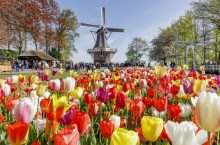 Keukenhof Tulip Garden (Amsterdam, Holland) – Opening hours, prices and travel directions