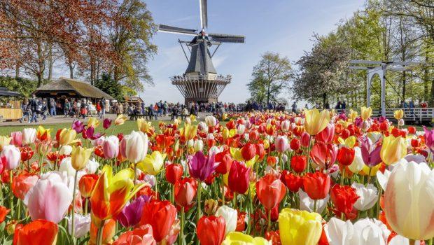 Buchen Sie Ihren Urlaub auf den Blumenfeldern rund um Keukenhof
