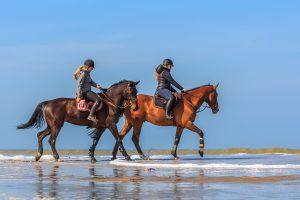 Paardrijden in de Bollenstreek