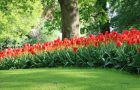 Blumenfelder in den Niederlanden