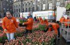 Kijk live mee naar Nationale Tulpendag op de Dam in Amsterdam