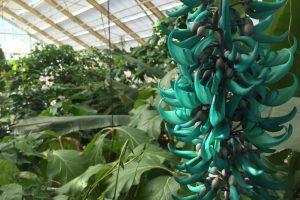 Hortus Botanicus Leiden – prijzen, openingstijden, parkeren