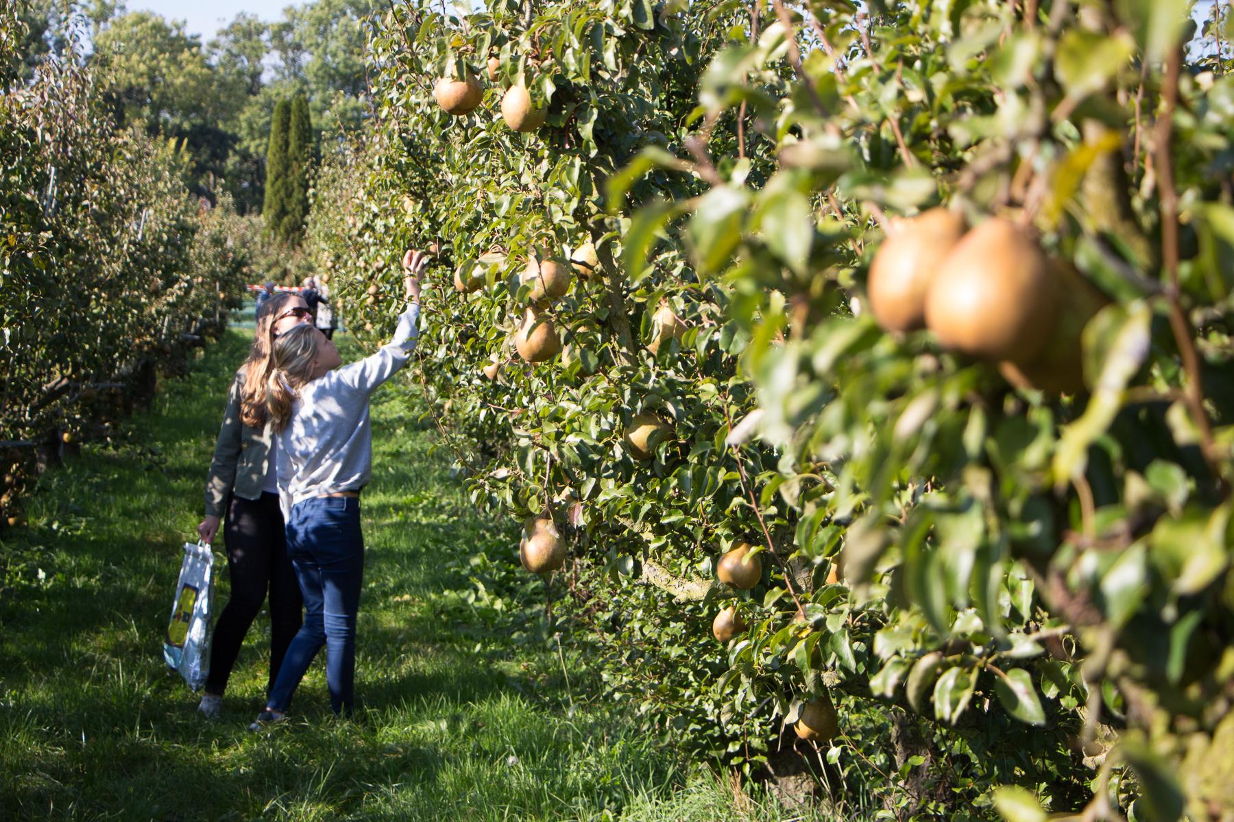 Zelf appels en peren plukken bij Landgoed de Olmenhorst