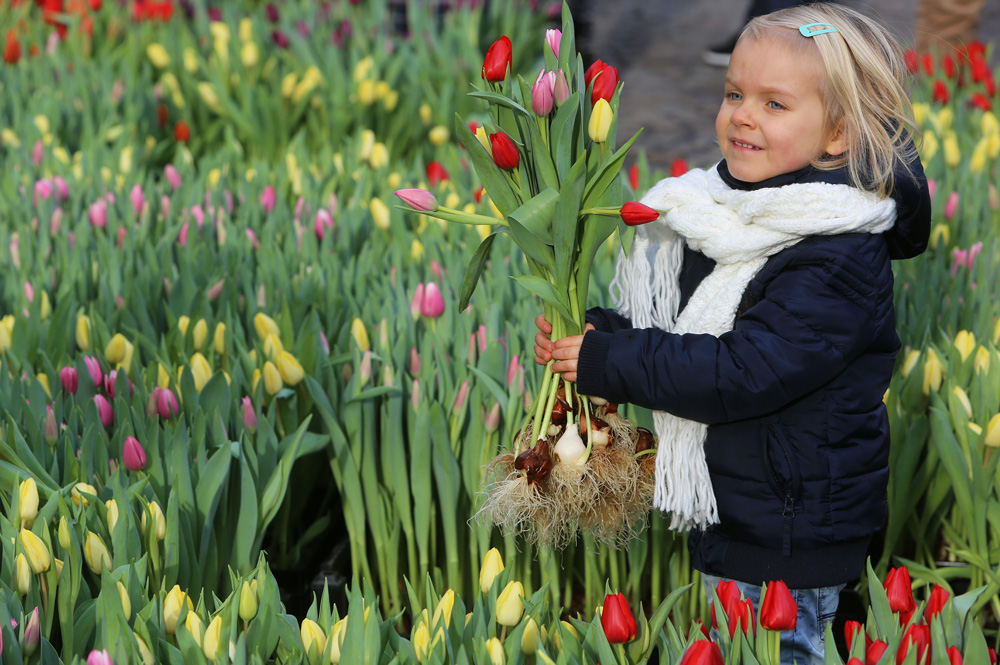 tulpenpluktuin nationale tulpendag Amsterdam