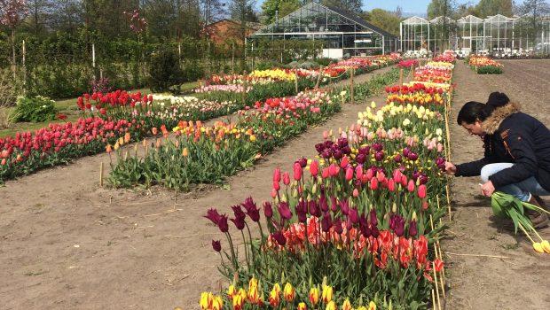 Showtuin TulipStore Voorhout